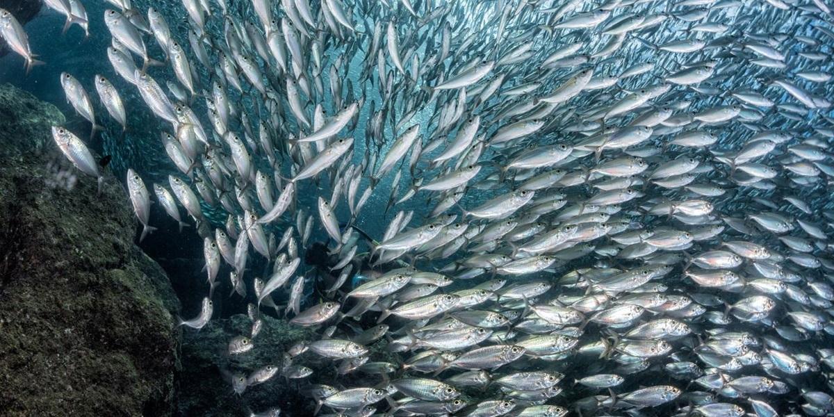 Pesca, tra eccessivo sfruttamento e sostenibilit��, non sappiamo spesso cosa mangiamo.