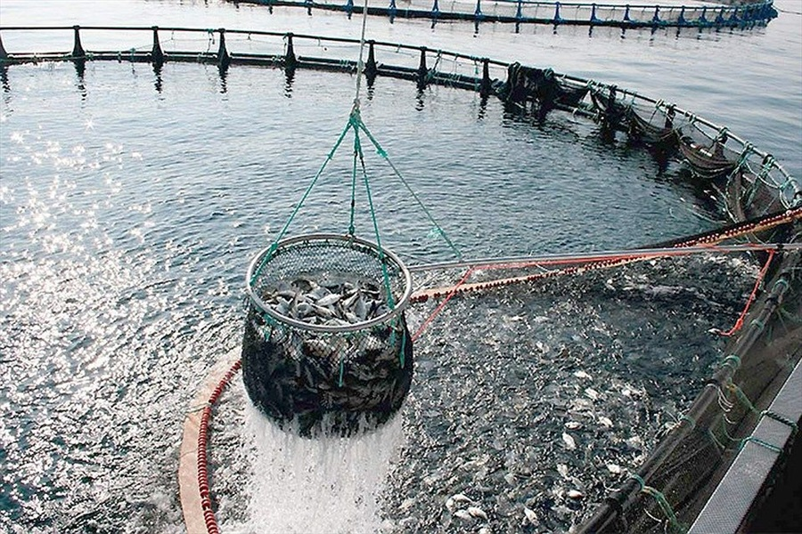 Ammiraglio Giuseppe De Giorgi - Consumo di pesce fresco a tavola, in Italia �� record. E non basta per tutti.
